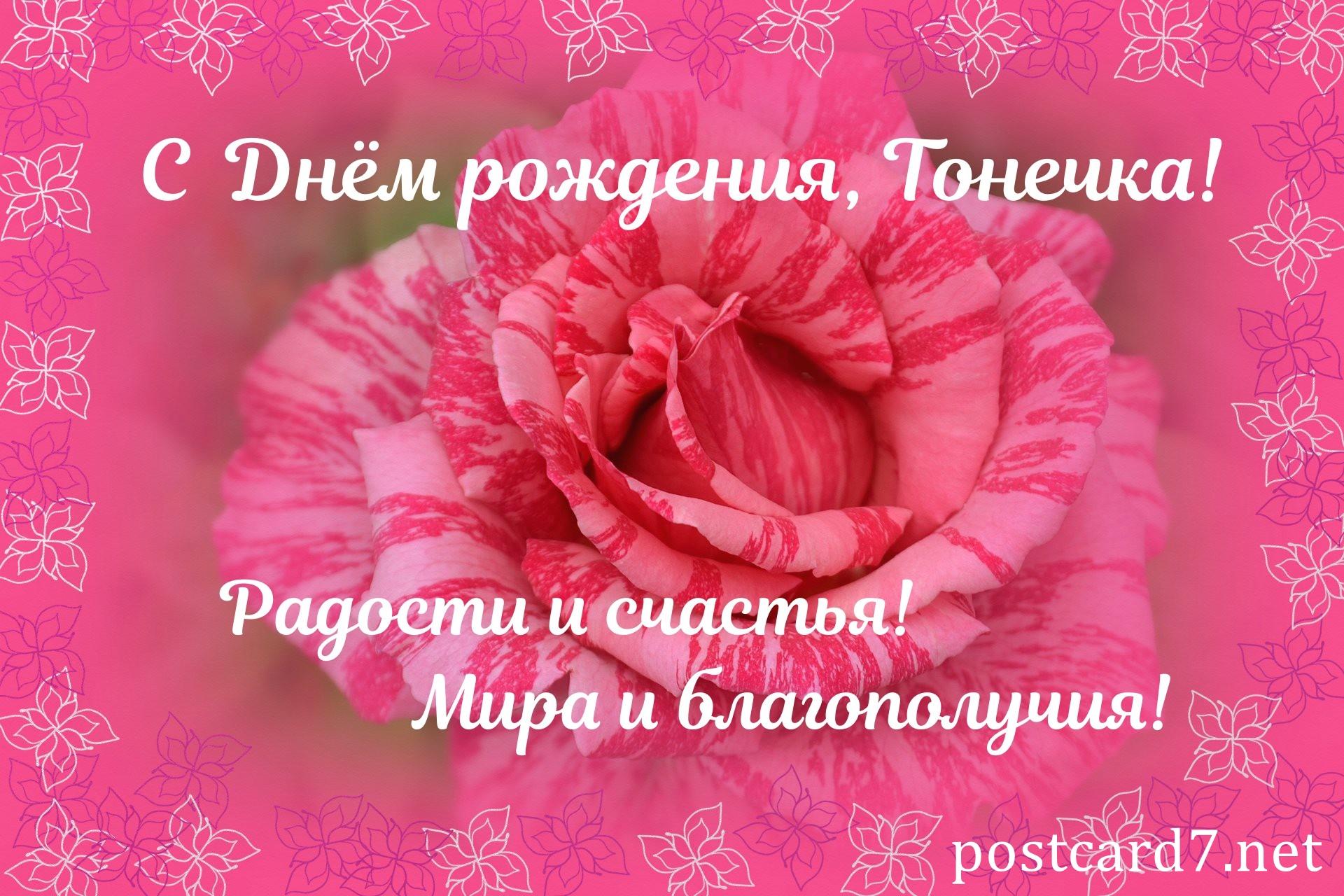 Роза Тонечке в День рождения, открытка