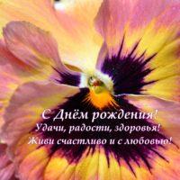 Виола, открытка, С Днём рождения