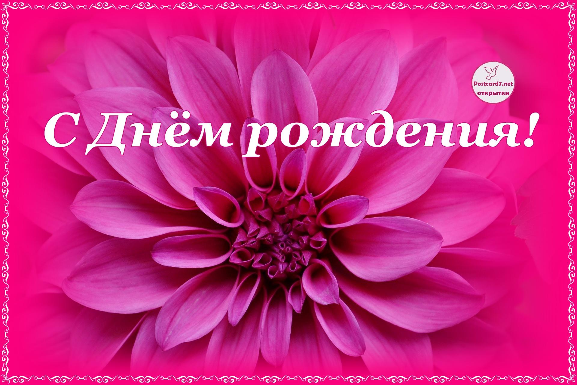 С Днём рождения! Открытка с тёмно-розовым георгином