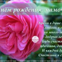 С Днём рождения, мамочка, открытка со стихами, роза