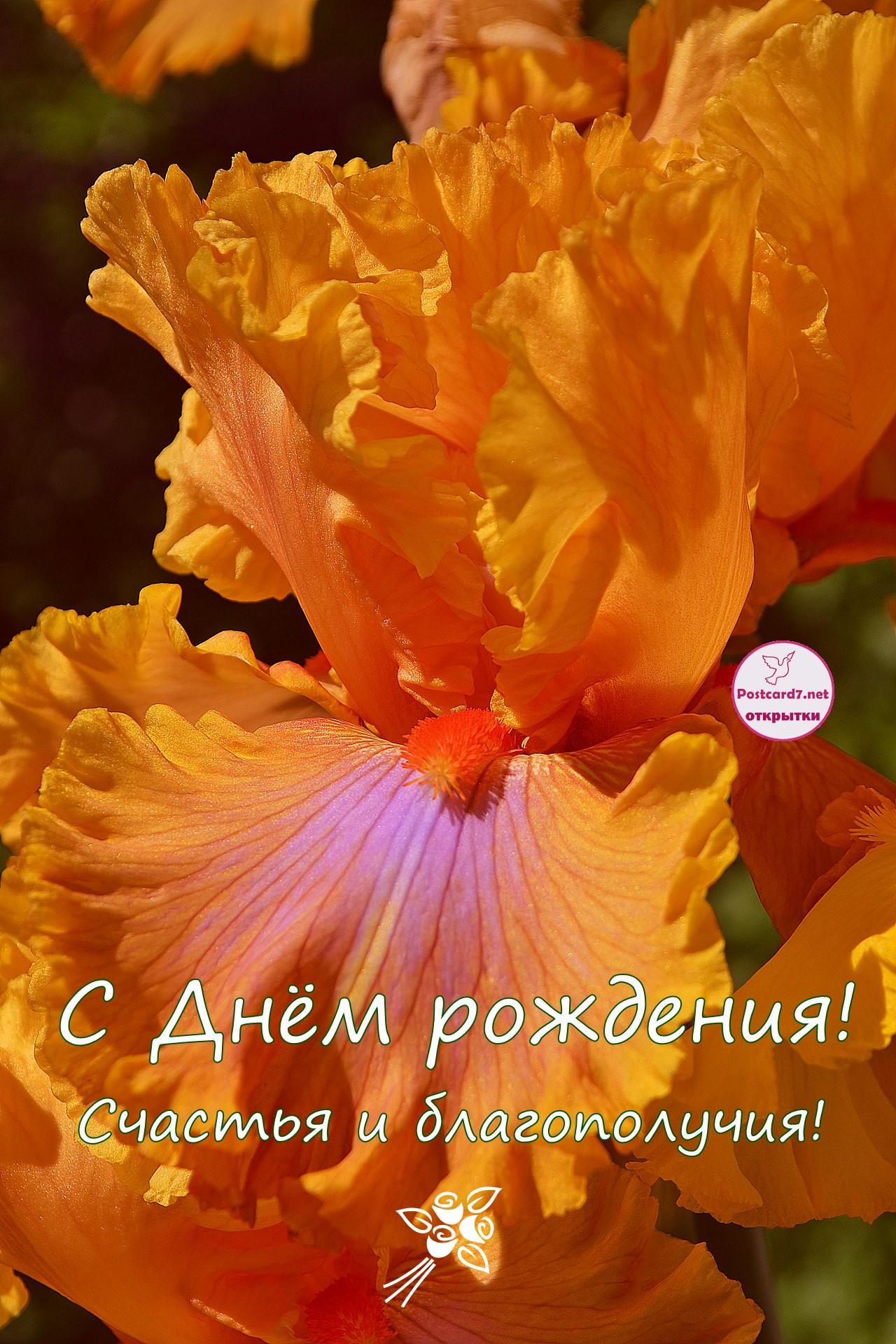 С Днём рождения, открытка с оранжевым ирисом