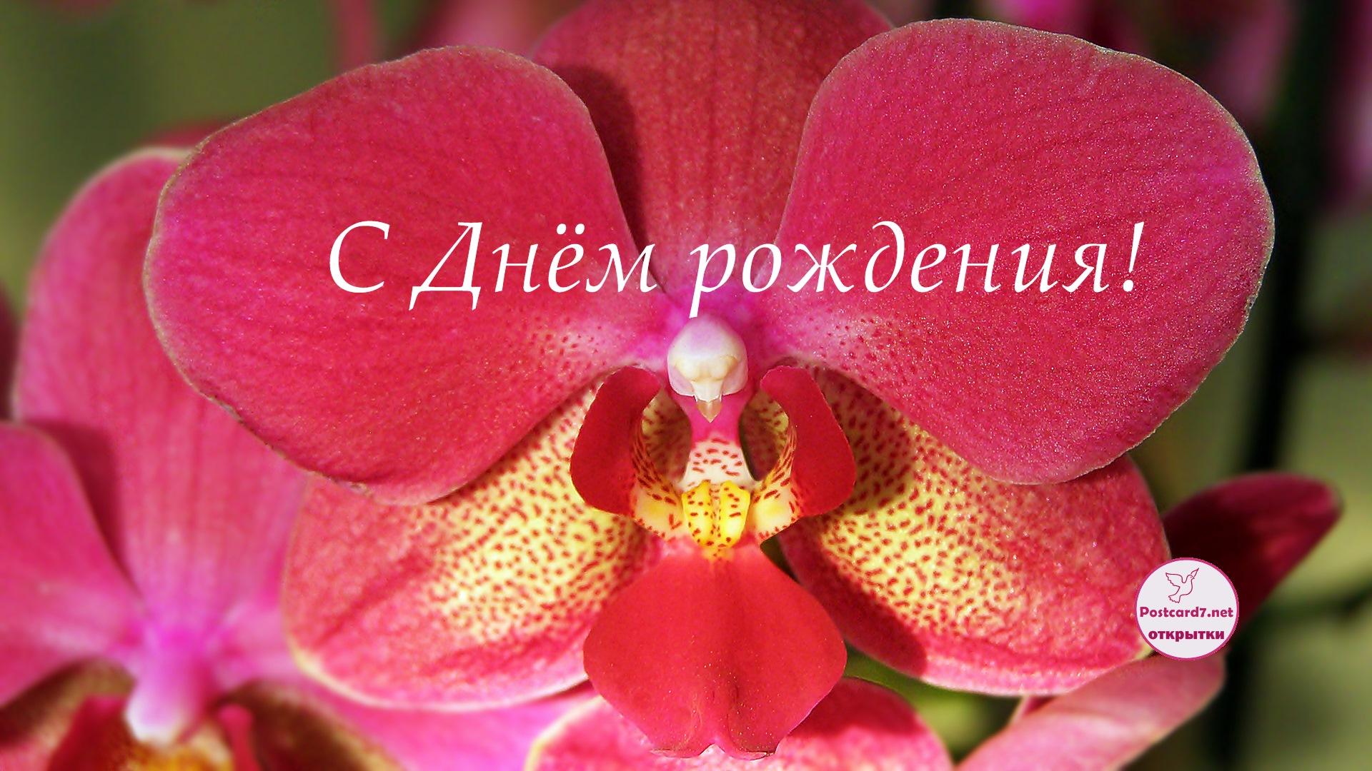 С Днём рождения, открытка,орхидея