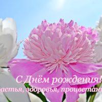 Пышный розовый пион крупным планом среди белых пионов на фоне неба. Открытка - С Днём рождения. Счастья, здоровья, процветания!