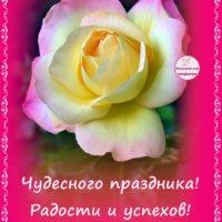 С Днём рождения, открытка. Жёлто-розовая роза