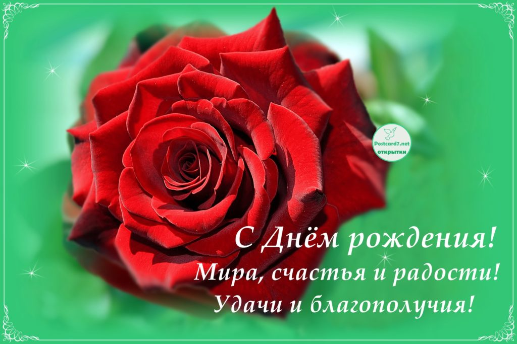 С Днём рождения, открытка, роза на зелёном
