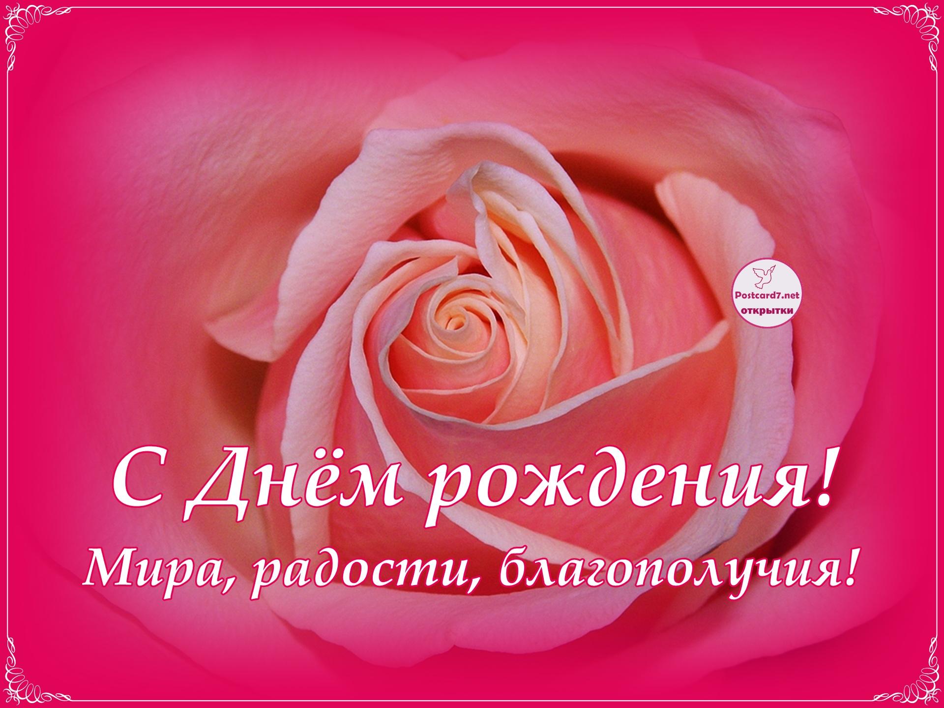 С Днём рождения, роза с пожеланиями