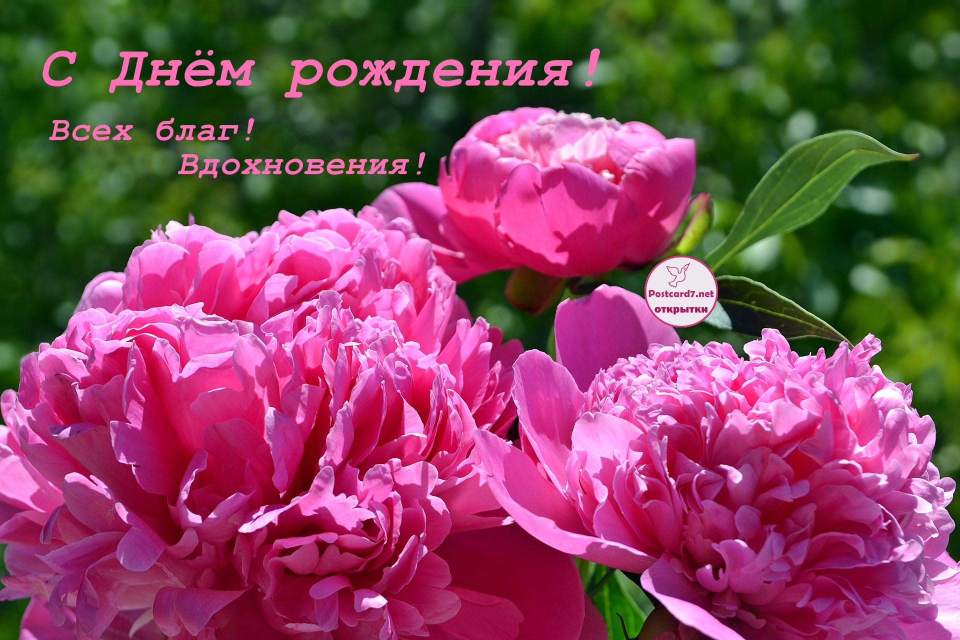 Розовые пионы на зелёном фоне. С Днём рождения!