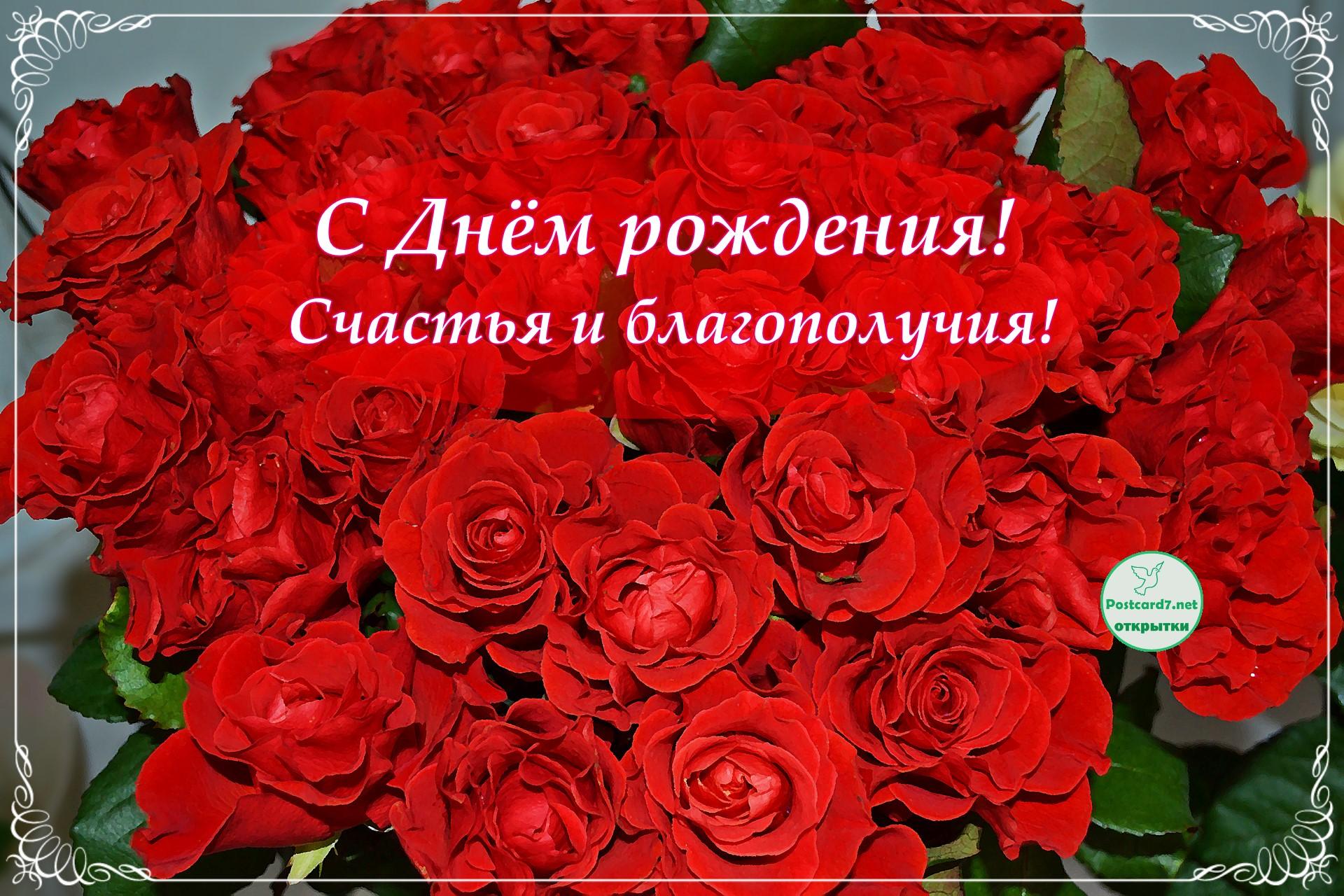 С Днём рождения! Открытка с ярко-красными розами