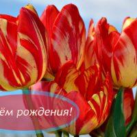С Днём рождения! Открытка с яркими полосатыми тюльпанами