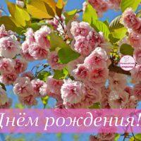 С Днём рождения! Открытка с цветущей веткой сакуры