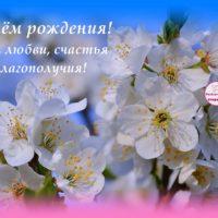 С Днём рождения, открытка с цветущим миндалём