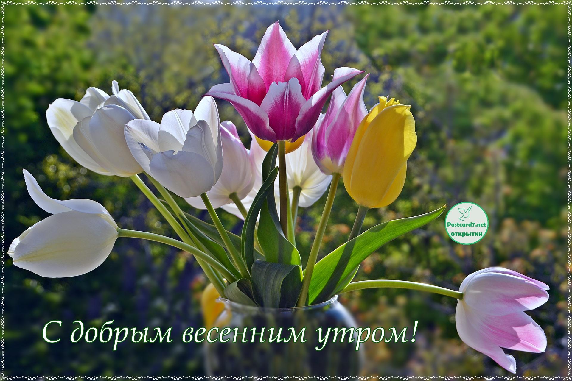 Весеннего утра открытка