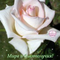 10-летие свадьбы, открытка, роза