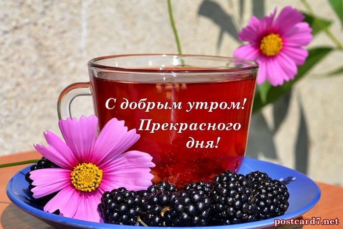 с добрым утром, чашка чая с ежевикой