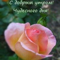 роза, с добрым утром