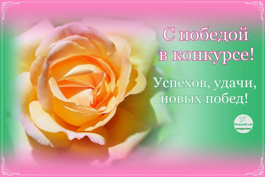 С победой в конкурсе, открытка, роза