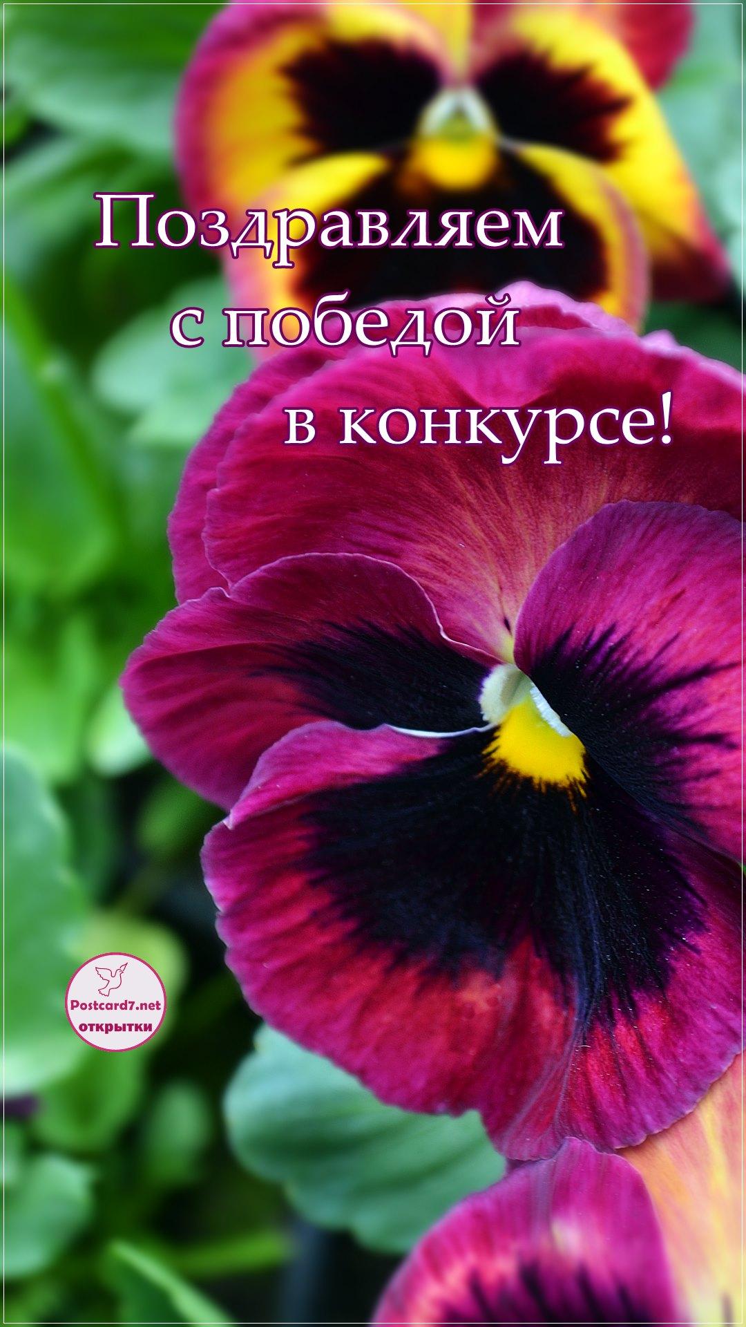 С победой в конкурсе, открытка