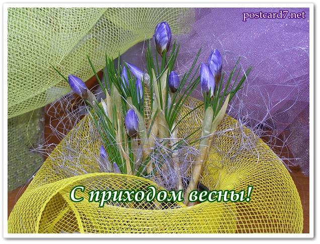 С приходом весны, открытка , шафран