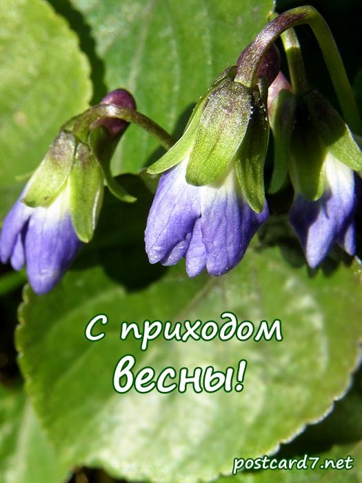 С приходом весны, открытка