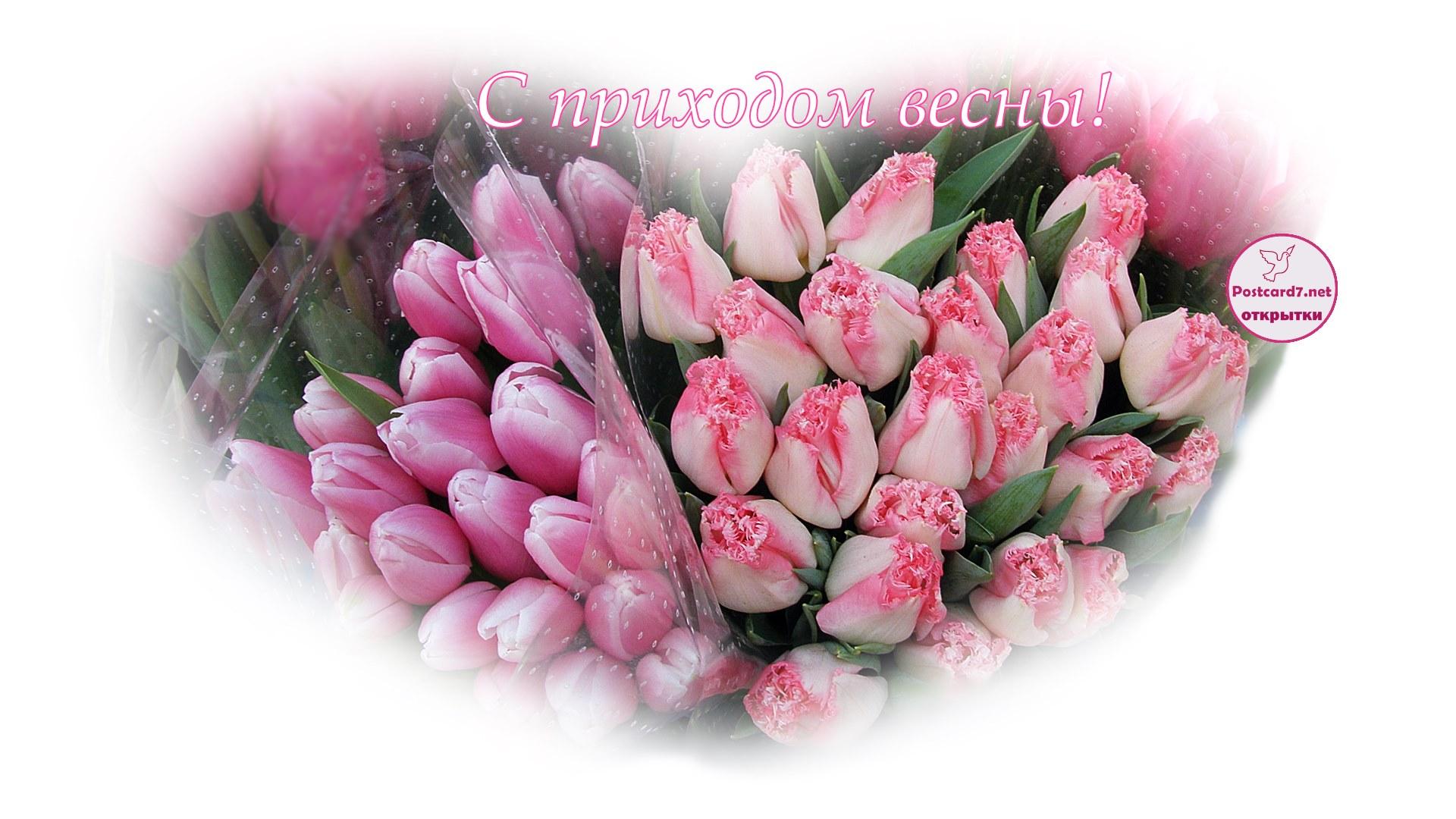 С приходом весны, тюльпаны, открытка