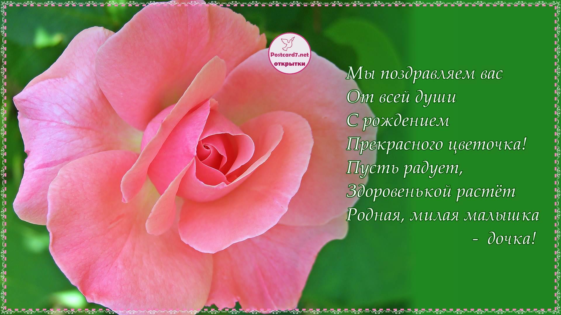Роза, открытка со стихами, с рождением дочки