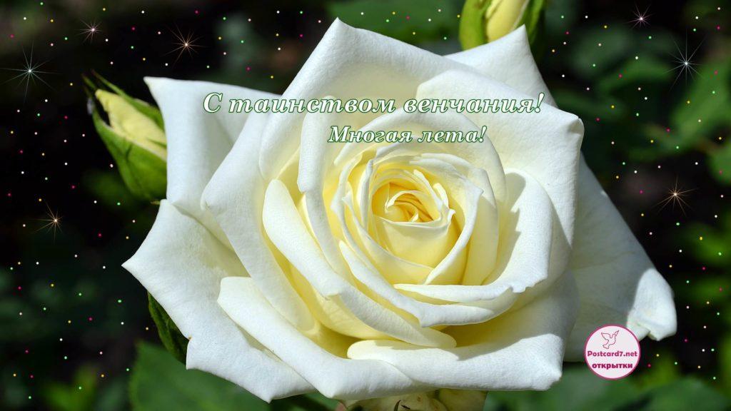 С венчанием, открытка, роза