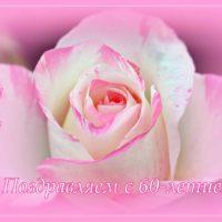 С 60-летием, роза, открытка
