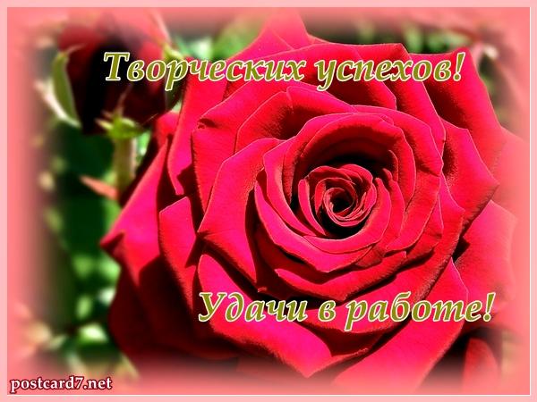 роза, удачи в работе