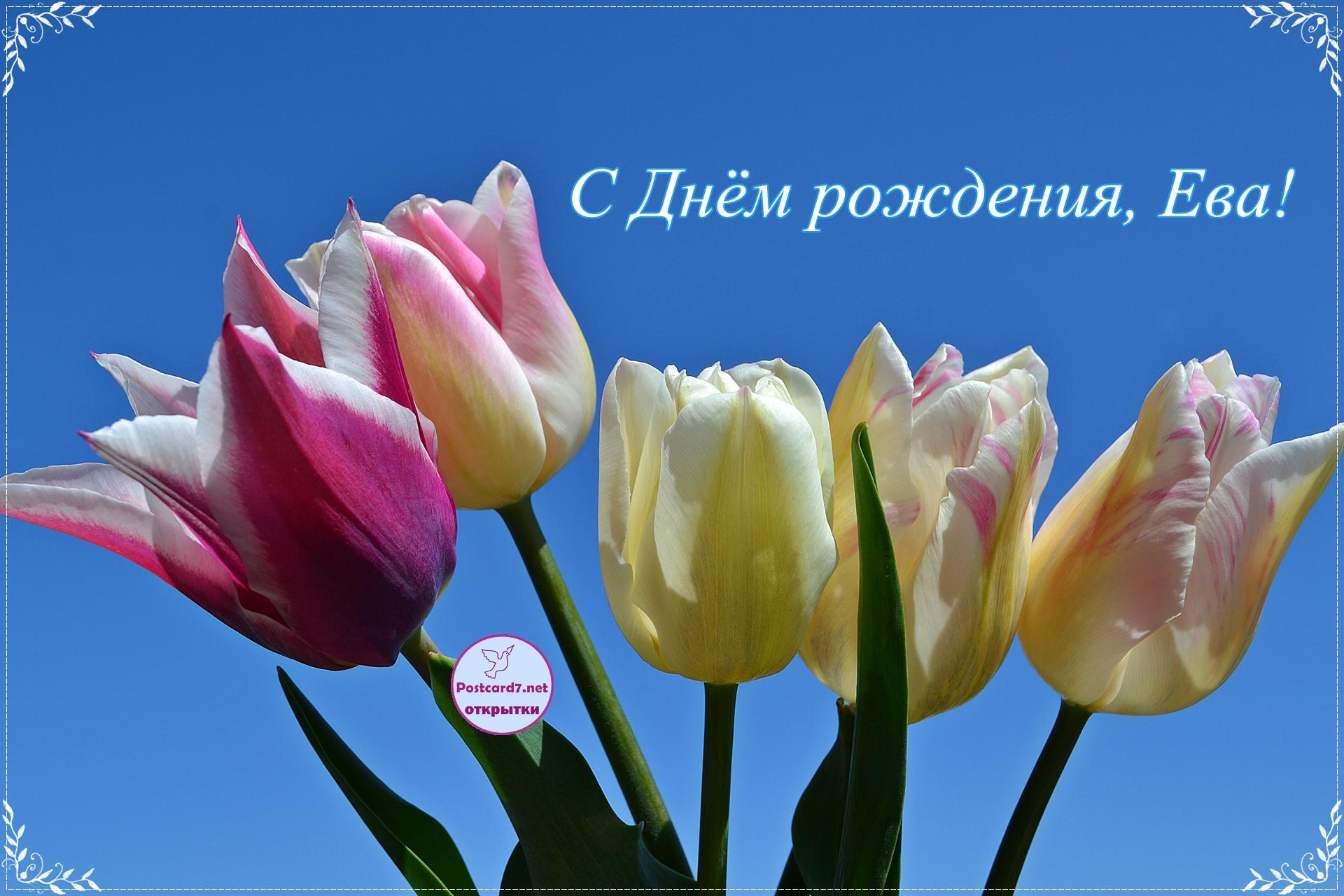 Тюльпаны Еве, открытка с Днём рождения