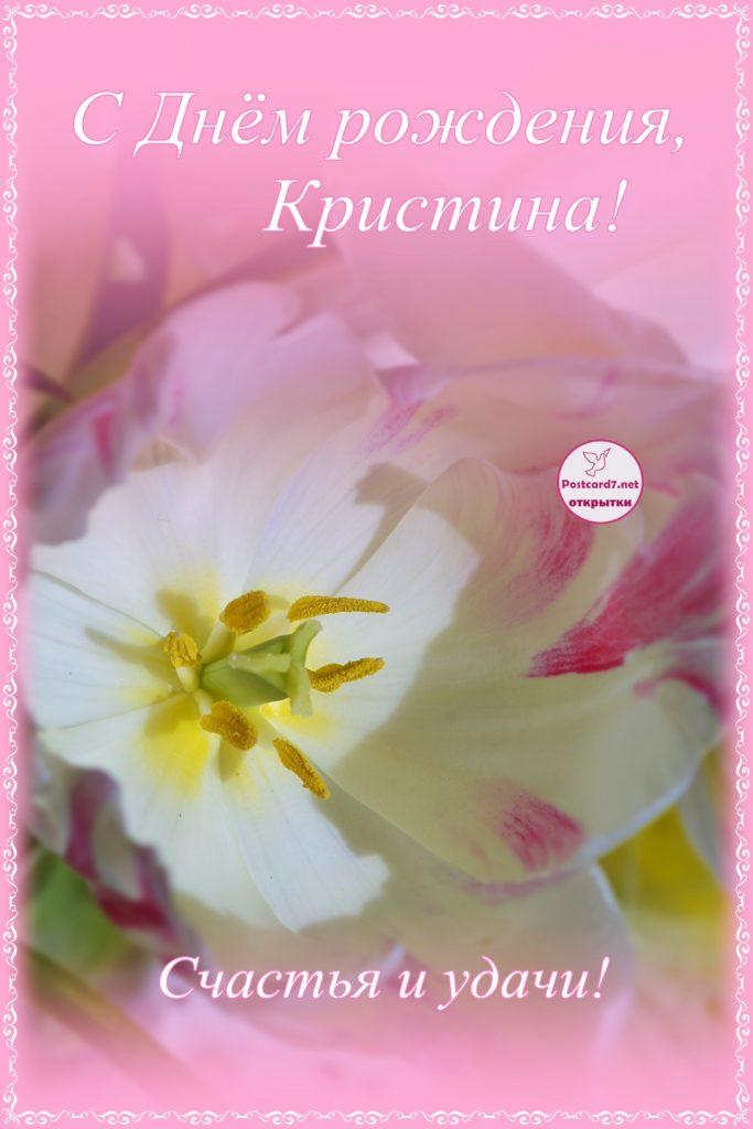Тюльпан Кристине, открытка на День рождения
