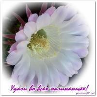цветок кактуса, удачи