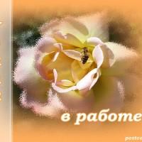 роза, пчела, удачи в работе