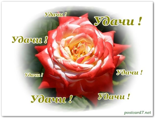 открытка роза, удачи