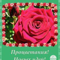Открытка с розой и пожеланиями успехов