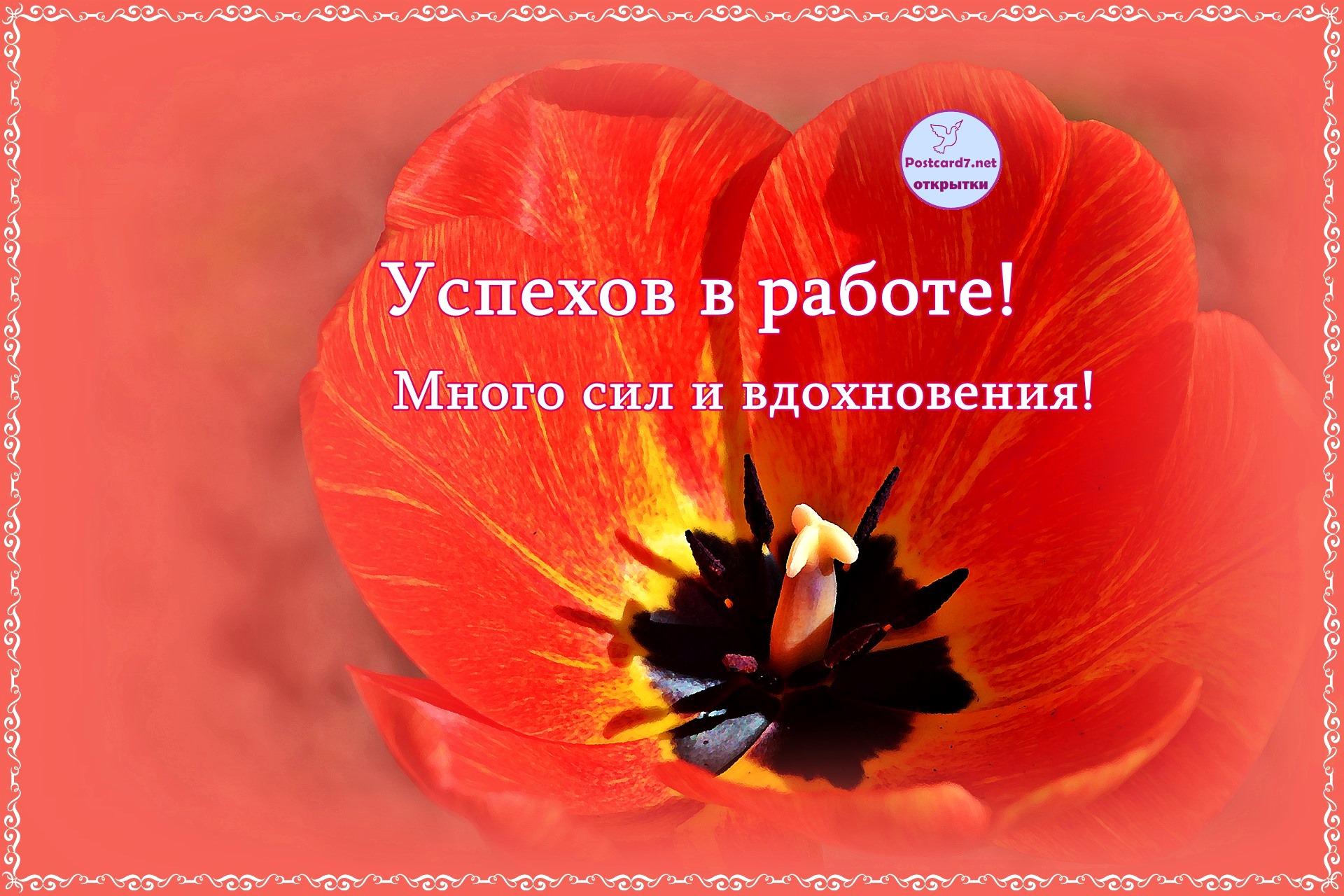 Успехов в работе, открытка с тюльпаном