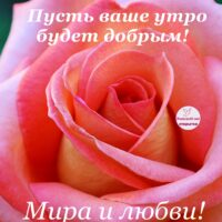 Пусть ваше утро будет добрым! Открытка с розой