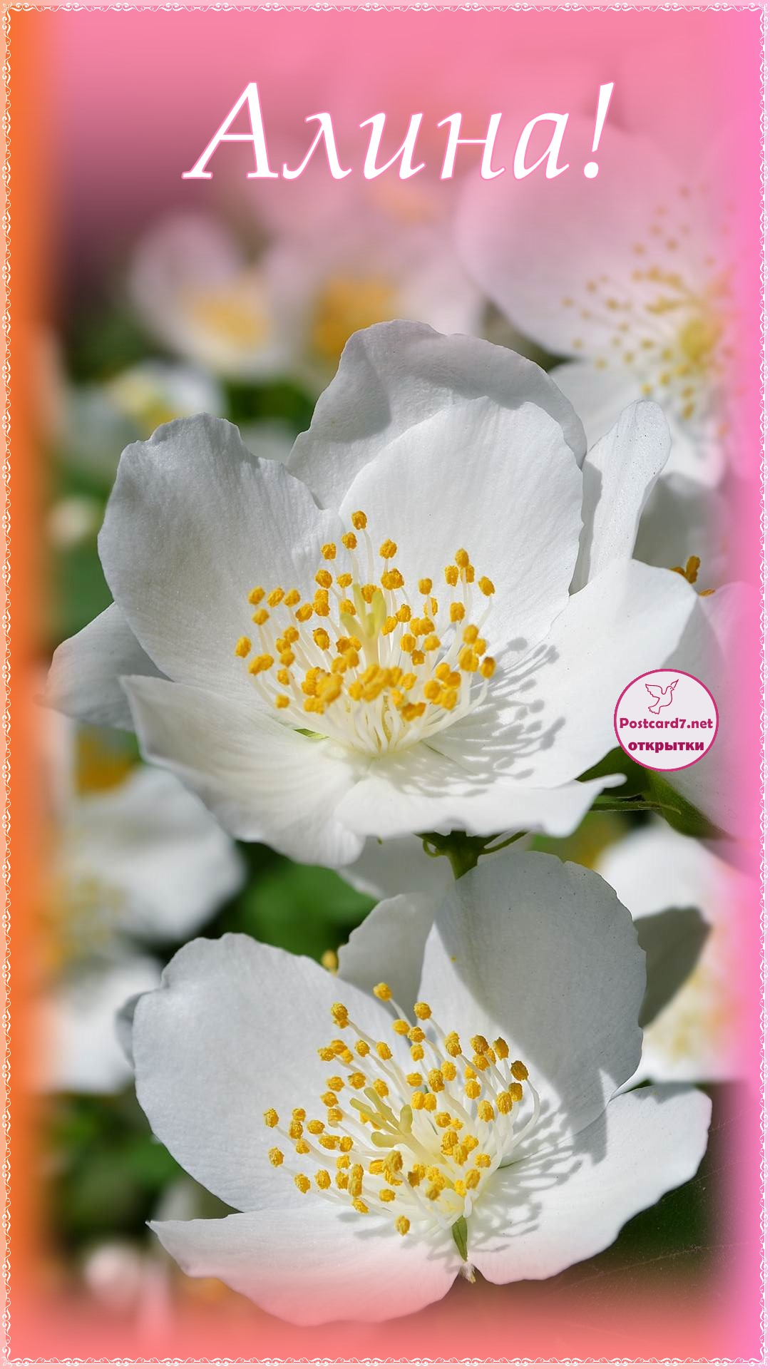 Цветки жасмина, открытка Алине