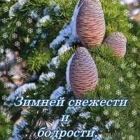 Зимней бодрости, открытка