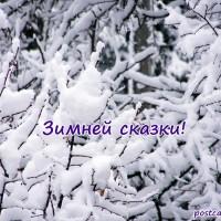 Зимней сказки, открытка, заснеженные веточки