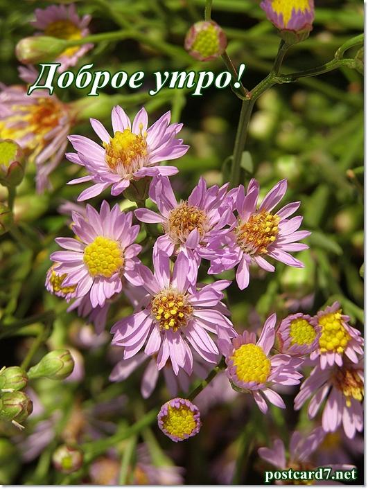 с добрым утром, сиреневые цветочки