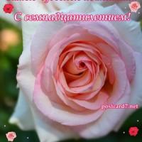 17 лет, роза, открытка