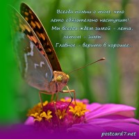 Бабочка на цветке, открытка. Верь в хорошее